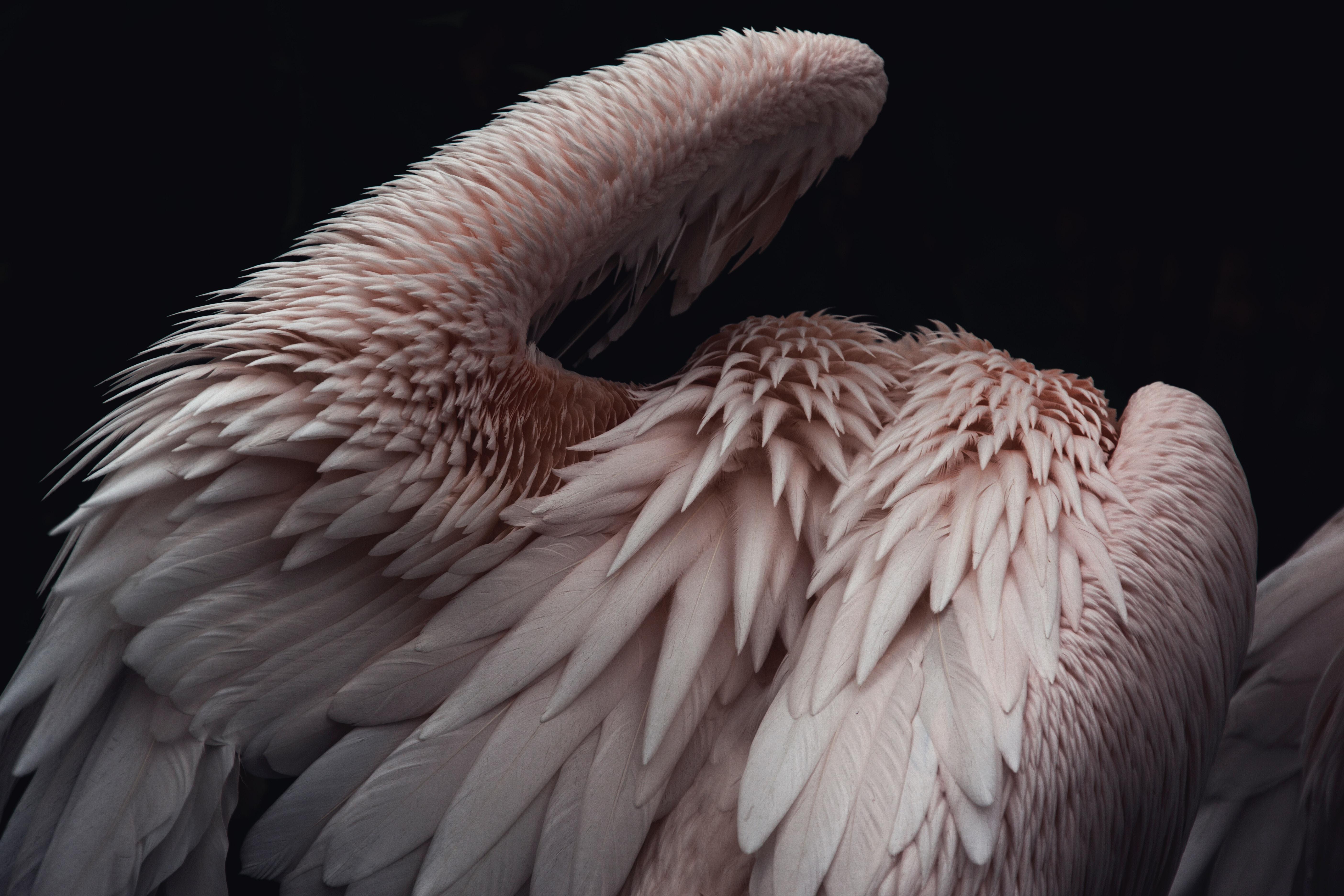 Wings Begin toUnfold